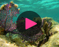 belize coral reef video