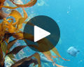 monterey bay aquarium play video
