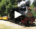 roaring camp railroads redwood forest steam train