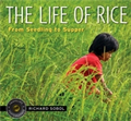 the life of rice thailand kids