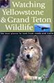 watching yellowstone grand teton wildlife