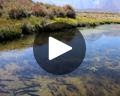 Hot Creek Fish Hatchery
