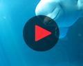shedd aquarium play video