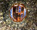 Ceiling Sforza Castle