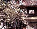 Kitano Shrine