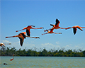 Flamingos in the Yucatan