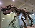 Dinosaur American Museum of Natural History