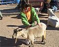 child petting a goat