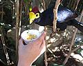 Feeding a bird at Discovery Cove