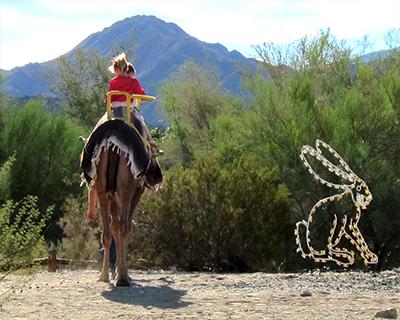 camel rides living desert palm springs
