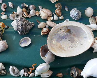 shells museum of natural history morro bay