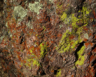 red green lichen on rocks pinnacles
