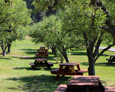 picnic orchard apple hill