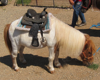 pony rides apple hill