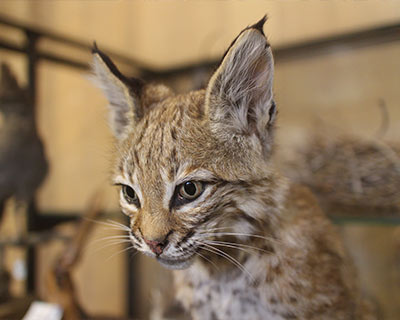 lynx emigrant trail museum donner state park