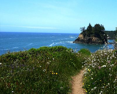 wildflowers trinidad california