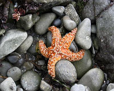 starfish patricks point state park