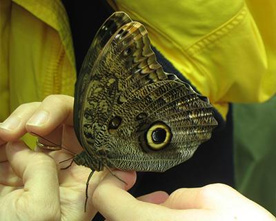 butterflies california academy sciences san francisco