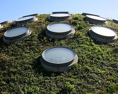 living roof california academy sciences san francisco