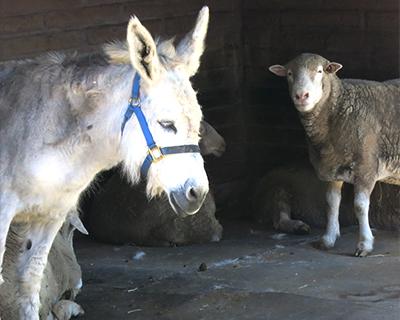 donkey petaluma adobe