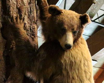 yosemite happy isles nature center bear