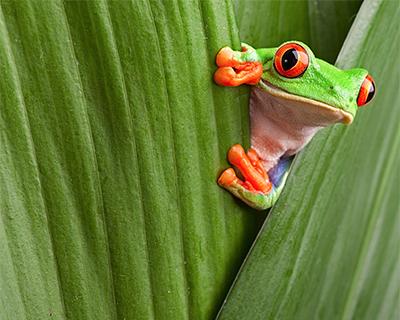 green eyed monster keene carolyn