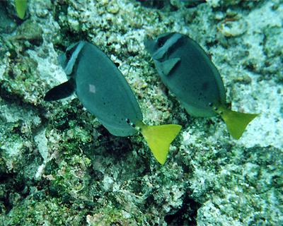 ecuador galapagos islands floreanna snorkeling