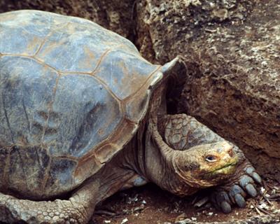 ecuador galapagos tortoise