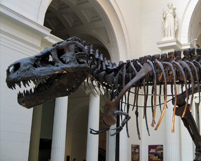sue t rex field museum chicago