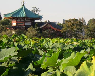 shinobazu pond ueno park