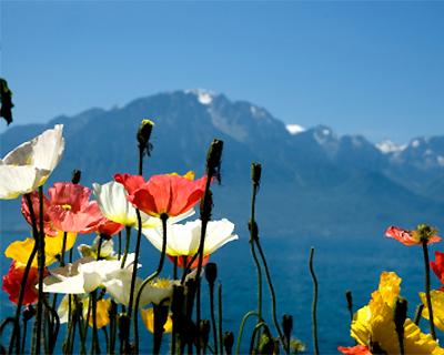 Travel for Kids Switzerland for Kids
