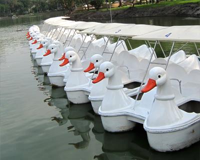 bangkok lumpini park pedal boats