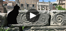 video cats rome