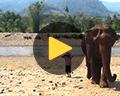 video elephant nature park