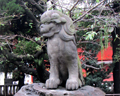 Stone lion at the Asakusa-jinga Tokyo