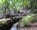 Shiba Park stream and trees