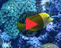 video sumida aquarium tokyo